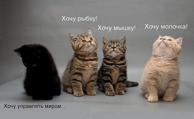 xcfQViVydtc